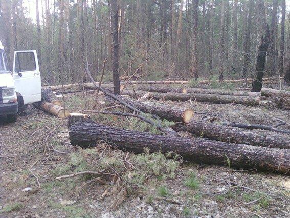 У Коростені затримали підпільних лісорубів (фото) - фото 1