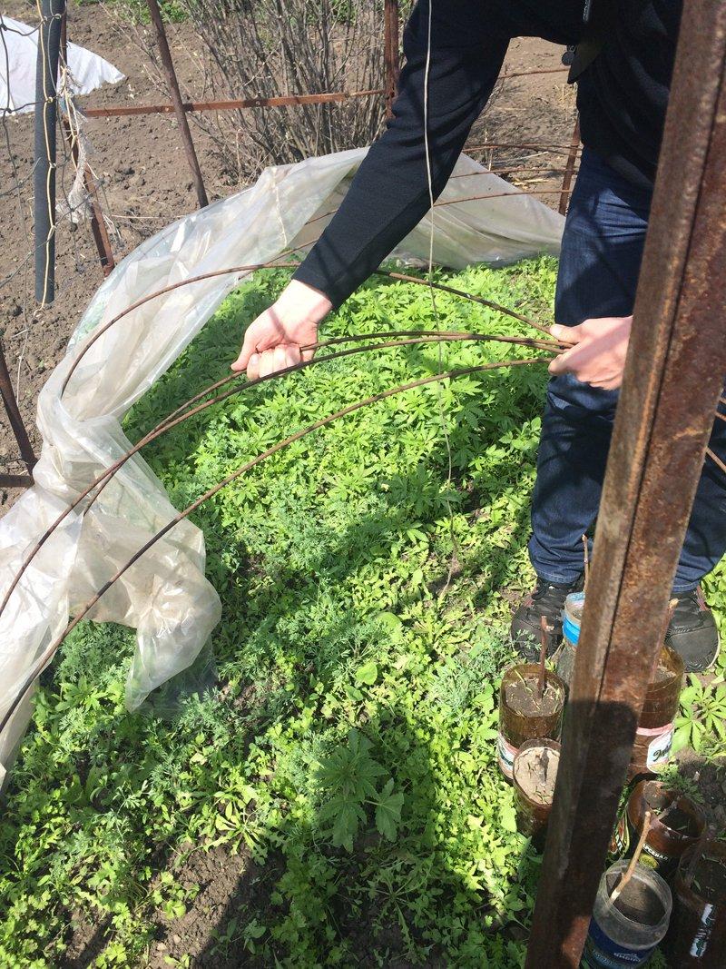 У мариупольца изъяли 382 куста конопли (ФОТО) (фото) - фото 1