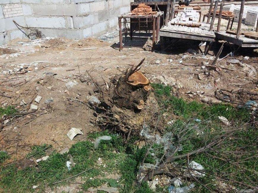 Как в Херсоне уничтожают зеленые насаждения (фото) (фото) - фото 1