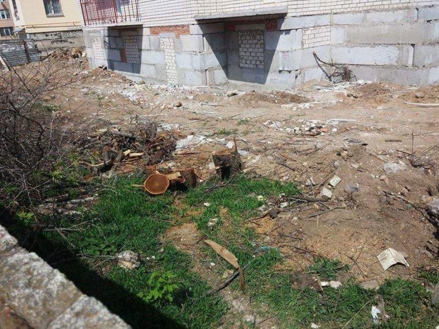 Как в Херсоне уничтожают зеленые насаждения (фото) (фото) - фото 2