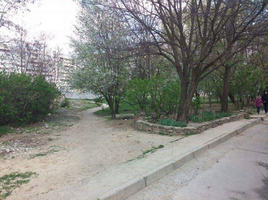 Как в Херсоне уничтожают зеленые насаждения (фото) (фото) - фото 3