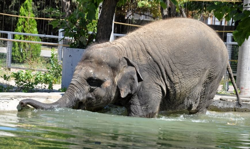 Ростовчан приглашают посмотреть, как купаются слоны (фото) - фото 1