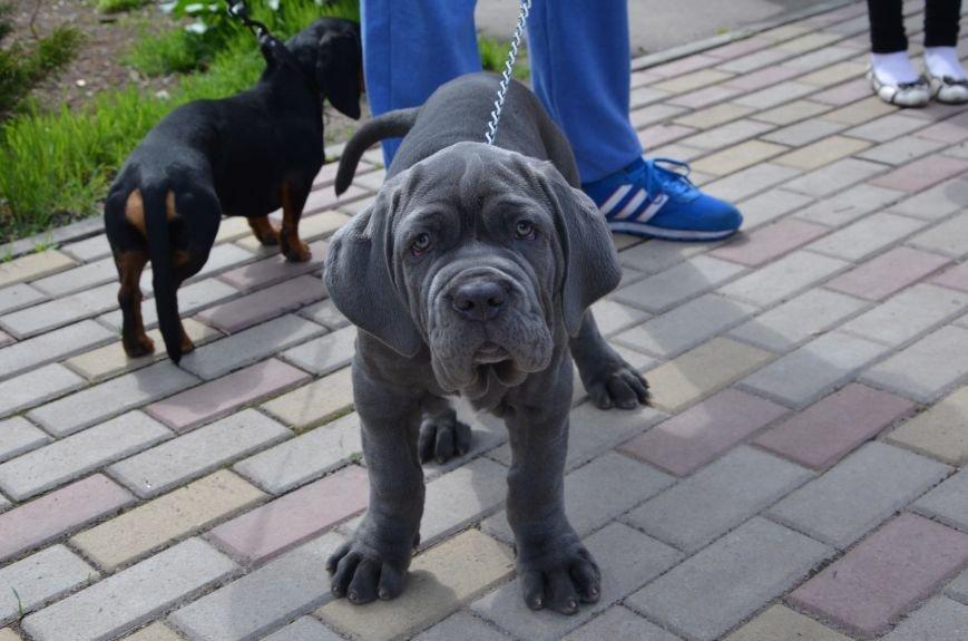 В Мариуполе погода сопутствовала выставке собак (ФОТО+ВИДЕО), фото-10