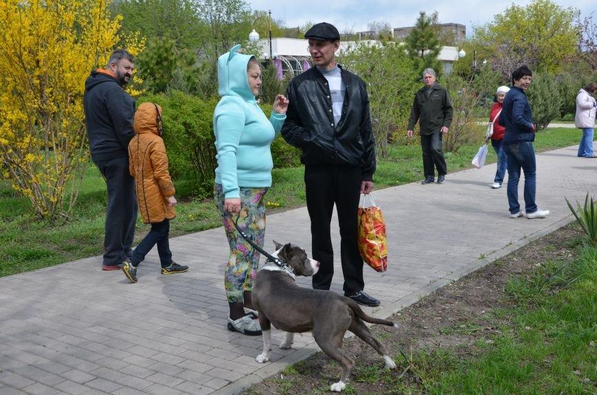 В Мариуполе погода сопутствовала выставке собак (ФОТО+ВИДЕО), фото-8