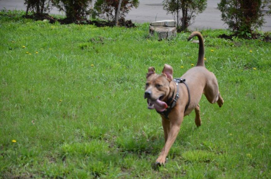В Мариуполе погода сопутствовала выставке собак (ФОТО+ВИДЕО), фото-7