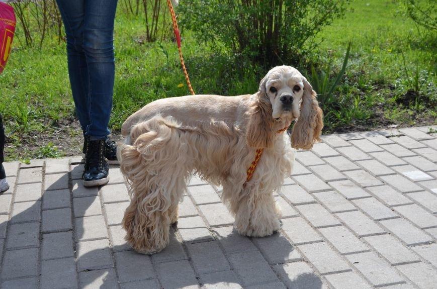В Мариуполе погода сопутствовала выставке собак (ФОТО+ВИДЕО), фото-6