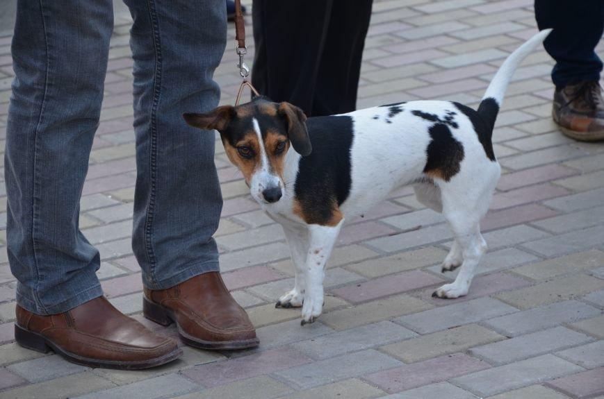 В Мариуполе погода сопутствовала выставке собак (ФОТО+ВИДЕО), фото-11