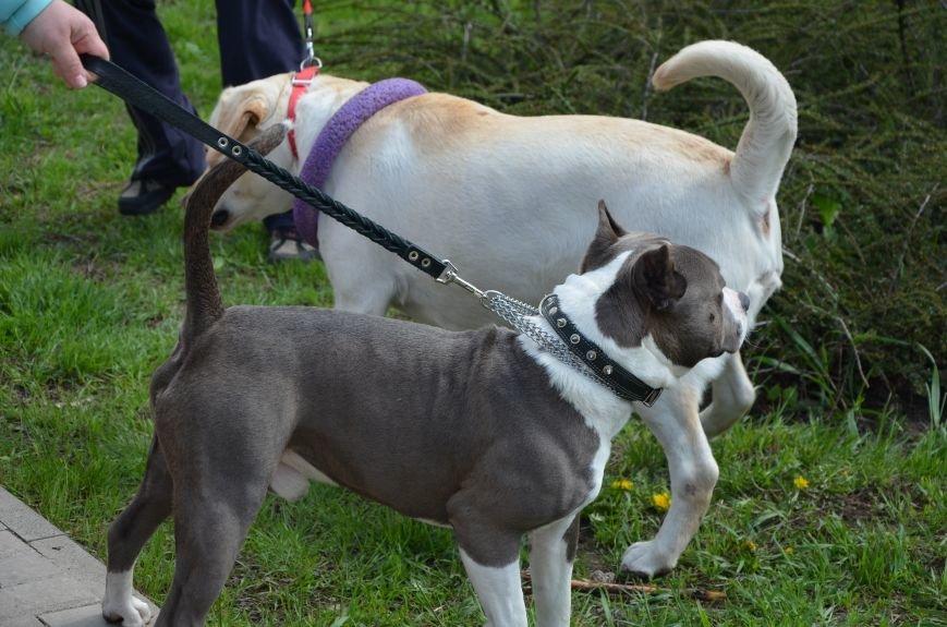 В Мариуполе погода сопутствовала выставке собак (ФОТО+ВИДЕО), фото-5