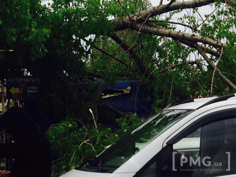 В Ужгороді на Краснодонців надзвичайна ситуація: дерево впало на автомобілі (фото) - фото 1