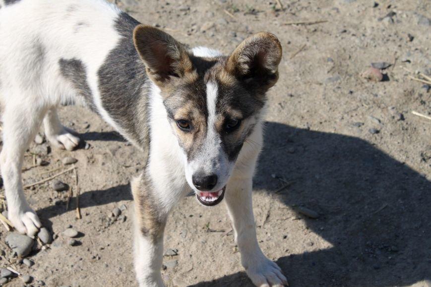Чому притулок в Ужгороді не вирішує проблему бродячих собак?, фото-9