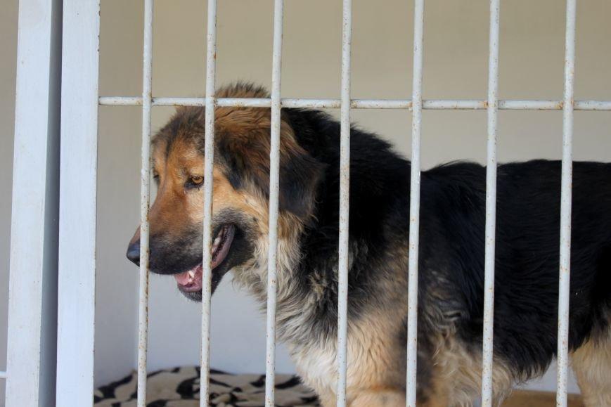 Чому притулок в Ужгороді не вирішує проблему бродячих собак?, фото-12