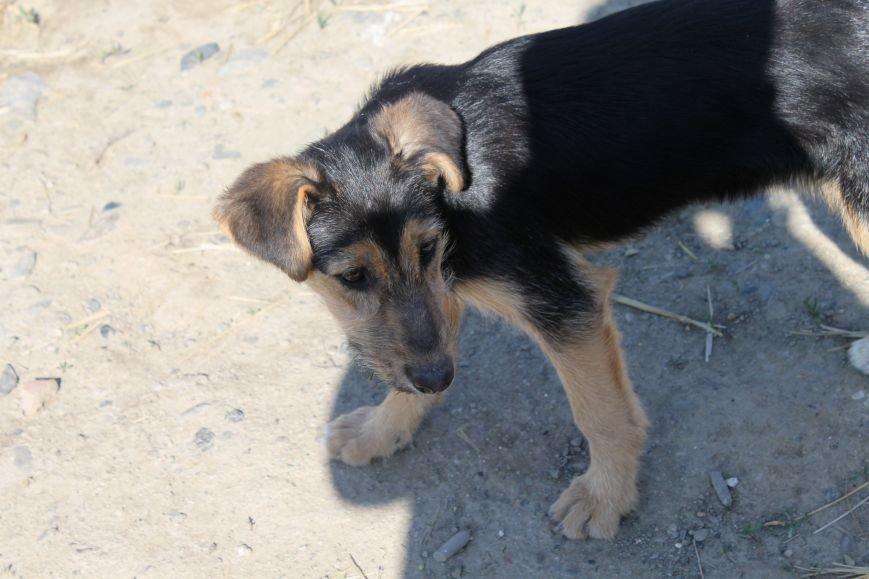 Чому притулок в Ужгороді не вирішує проблему бродячих собак?, фото-11