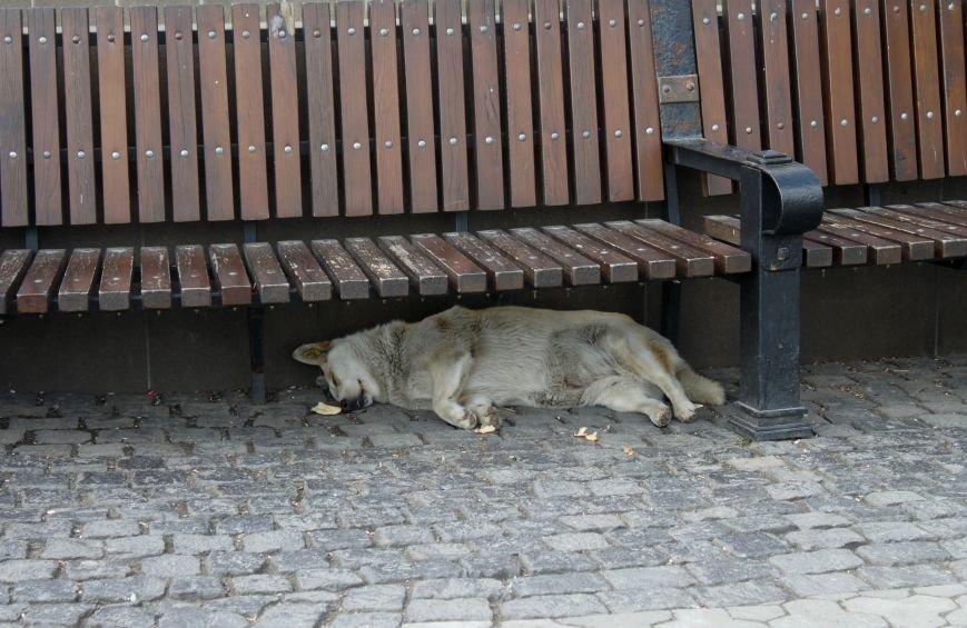 Чому притулок в Ужгороді не вирішує проблему бродячих собак?, фото-5