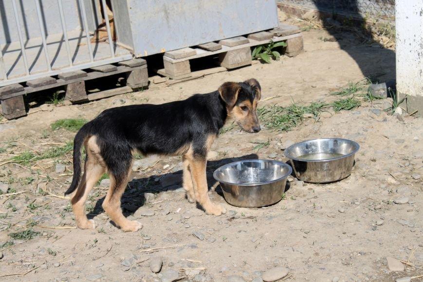 Чому притулок в Ужгороді не вирішує проблему бродячих собак?, фото-6