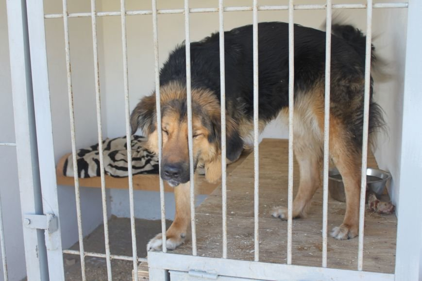 Чому притулок в Ужгороді не вирішує проблему бродячих собак?, фото-4