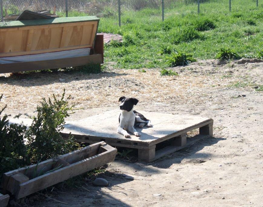 Чому притулок в Ужгороді не вирішує проблему бродячих собак?, фото-10