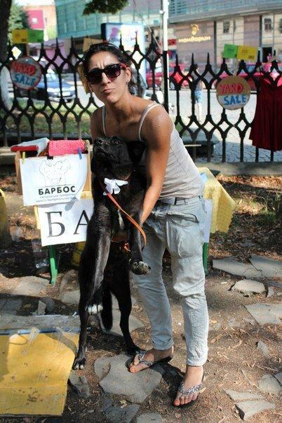 Чому притулок в Ужгороді не вирішує проблему бродячих собак?, фото-1
