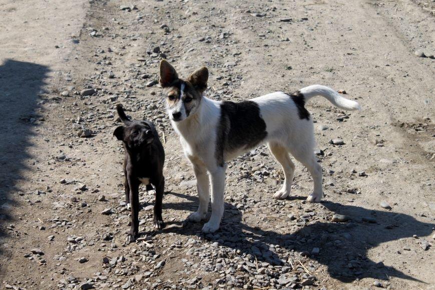 Чому притулок в Ужгороді не вирішує проблему бродячих собак?, фото-3