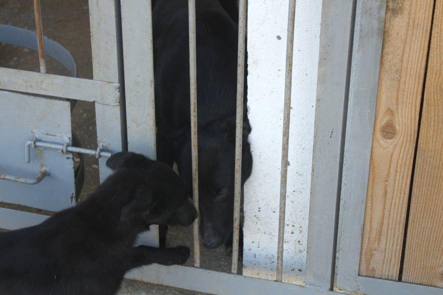Чому притулок в Ужгороді не вирішує проблему бродячих собак?, фото-13