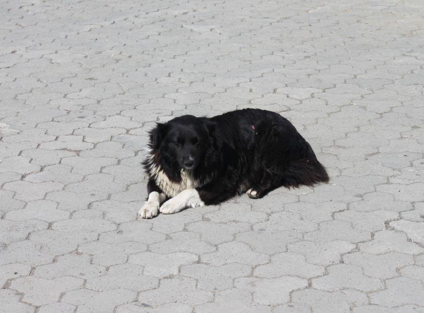 Чому притулок в Ужгороді не вирішує проблему бродячих собак?, фото-7
