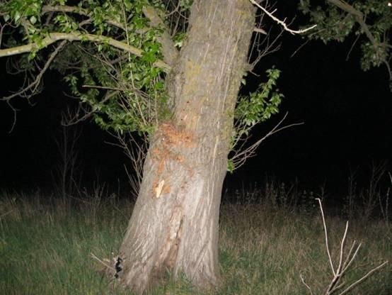 ДТП на Львівщині: автівка зіткнулася із деревом, загинуло двоє людей (ФОТО) (фото) - фото 2
