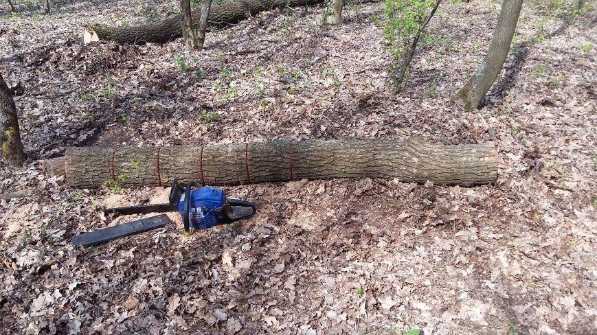 В заповедной зоне лесная охрана задержала незаконных дровосеков, фото-5