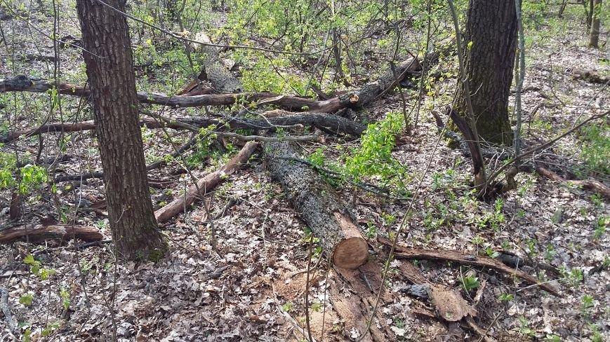 В заповедной зоне лесная охрана задержала незаконных дровосеков, фото-3