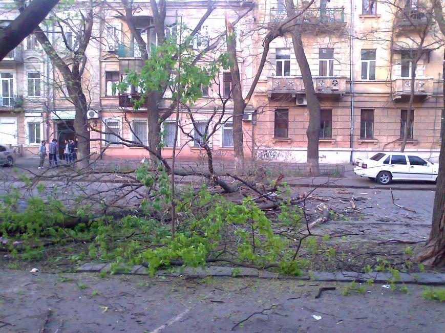 В центре Одессы дерево рухнуло на дорогу (ФОТО, ВИДЕО) (фото) - фото 1