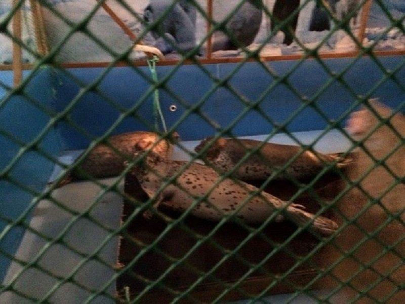 Китообразным в Анапе снова нужна помощь (фото) - фото 2