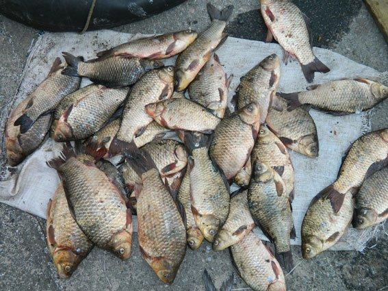На Днепродзержинском водохранилище поймали браконьеров (фото) - фото 2