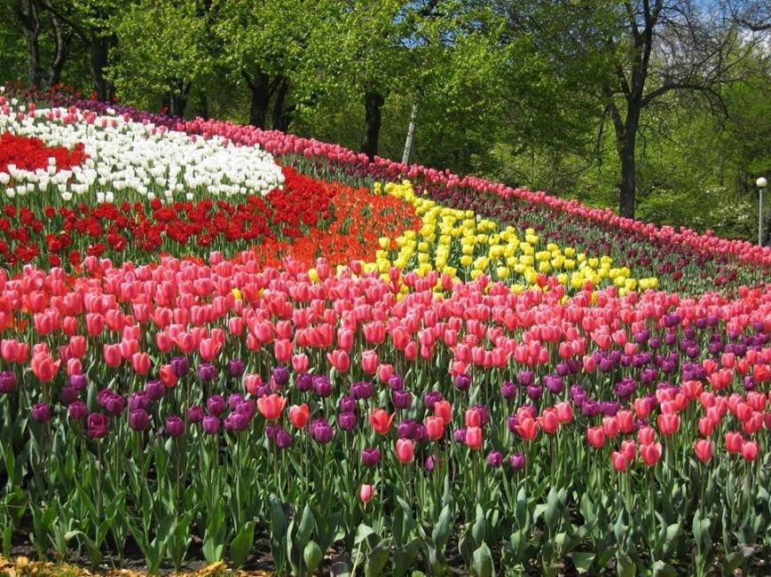 На Певческом поле открылась выставка тюльпанов (ФОТО), фото-6