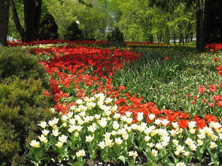На Певческом поле открылась выставка тюльпанов (ФОТО), фото-2