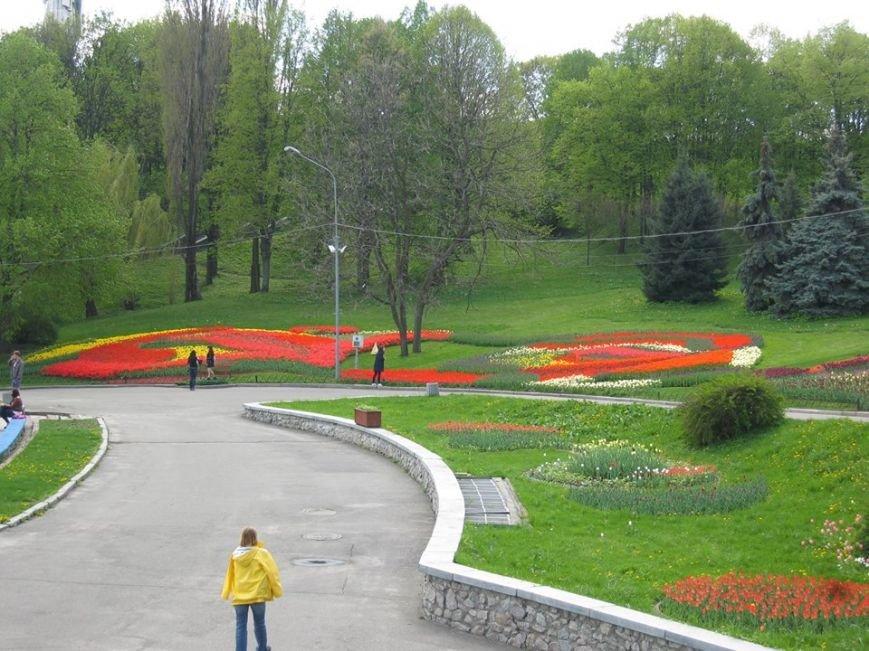 На Певческом поле открылась выставка тюльпанов (ФОТО), фото-4
