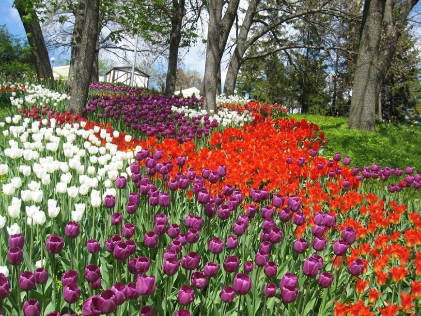 На Певческом поле открылась выставка тюльпанов (ФОТО), фото-1