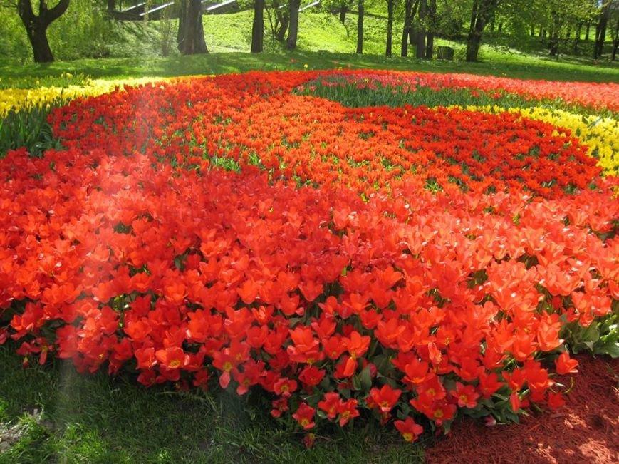 На Певческом поле открылась выставка тюльпанов (ФОТО), фото-5