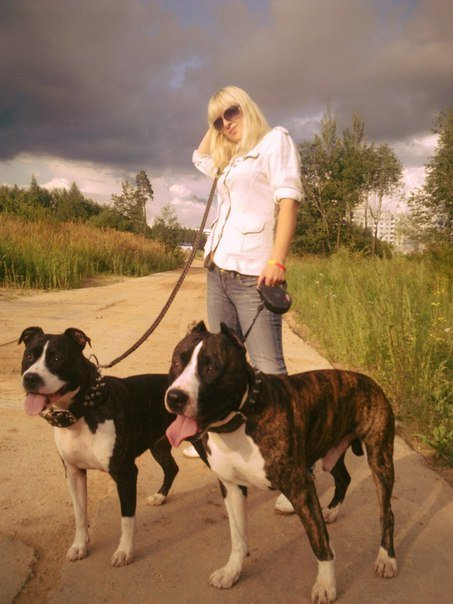 Пятерка обсуждаемых предложений законопроекта «Об обращении с животными» по версии новополочан и полочан (фото) - фото 2
