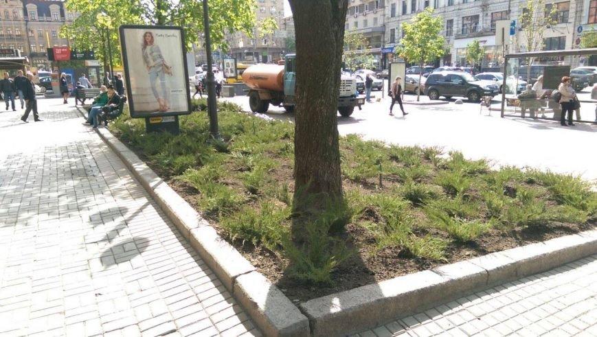 В этом году Крещатик засадят можжевельником (ФОТО), фото-4