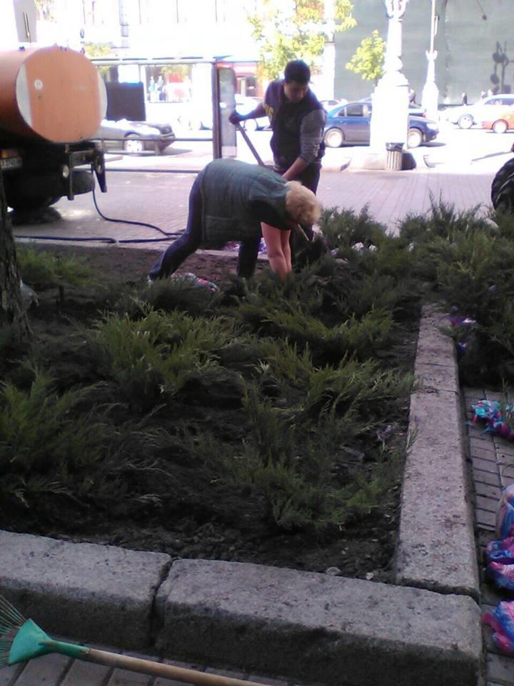 В этом году Крещатик засадят можжевельником (ФОТО), фото-2