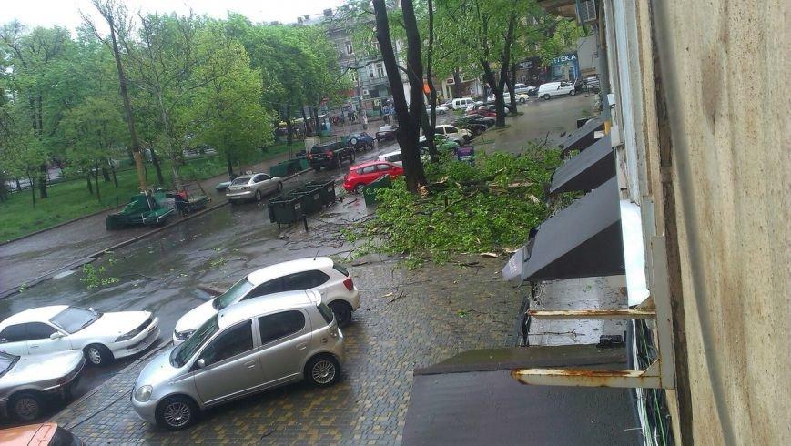 На одесской Соборке огромные ветки перекрыли тротуар (ФОТО) (фото) - фото 1