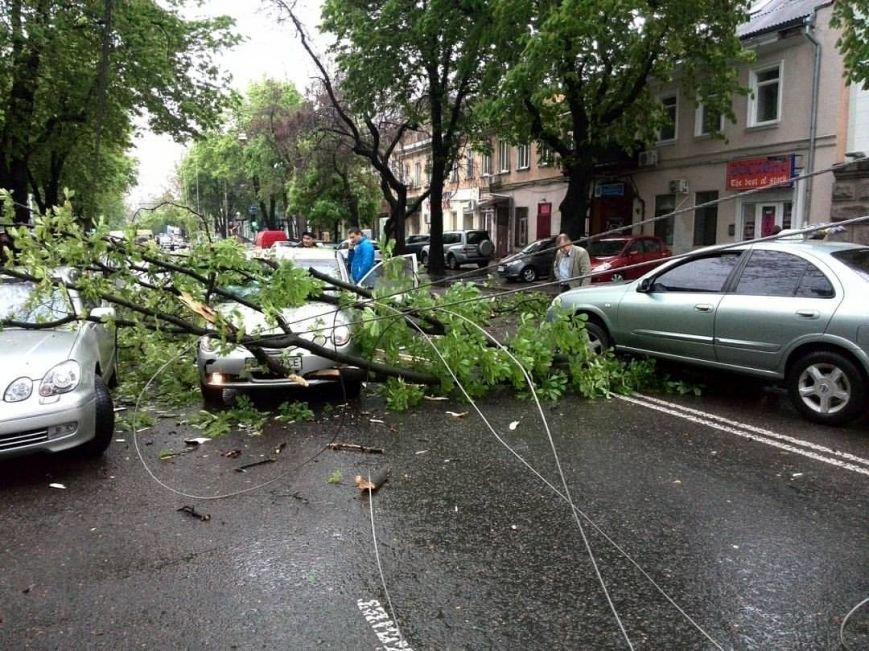 3062cc411ad0b0b44d6d025e446c2a05 В центре Одессы ветки деревьев рухнули на проезжающие машины