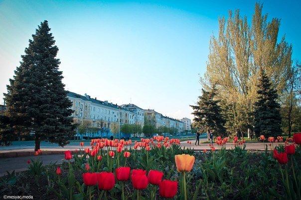 Минутка красоты. Макеевские тюльпаны (фото) (фото) - фото 1