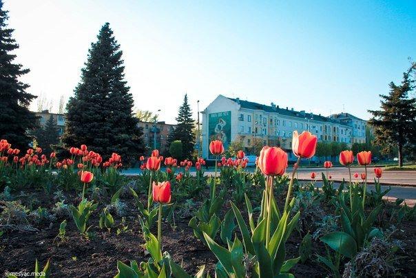 Минутка красоты. Макеевские тюльпаны (фото) (фото) - фото 6