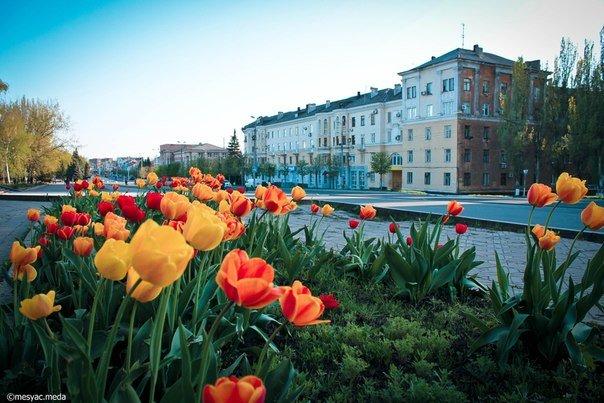 Минутка красоты. Макеевские тюльпаны (фото) (фото) - фото 5