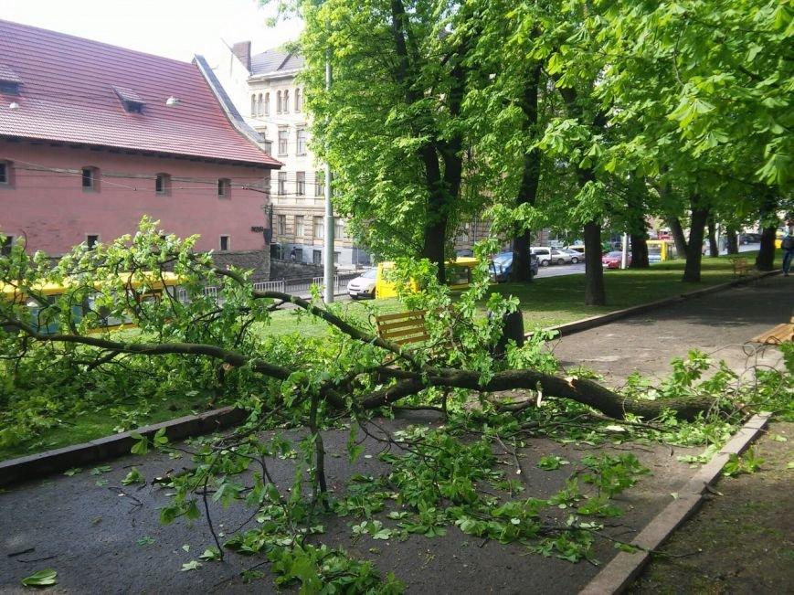 У центрі Львова на двох школярок впала частина дерева (ФОТО) (фото) - фото 1