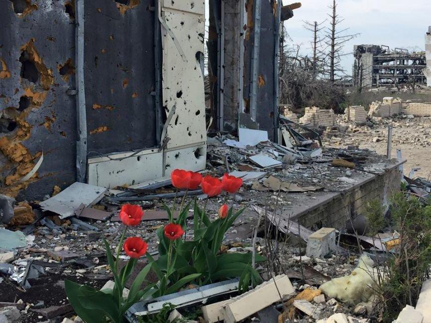 Сильнее смерти. В разбитом Донецком аэропорту зацвели тюльпаны (фото) - фото 1