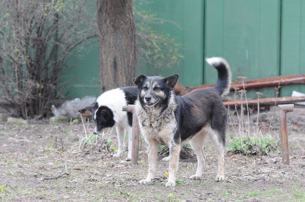 Мариупольские волонтеры спасают слепого пса и его маму (ФОТО), фото-1
