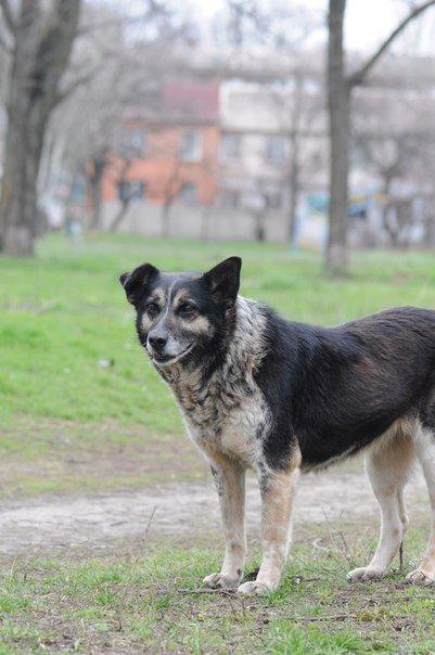 Мариупольские волонтеры спасают слепого пса и его маму (ФОТО), фото-3