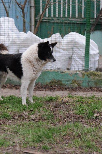 Мариупольские волонтеры спасают слепого пса и его маму (ФОТО), фото-4