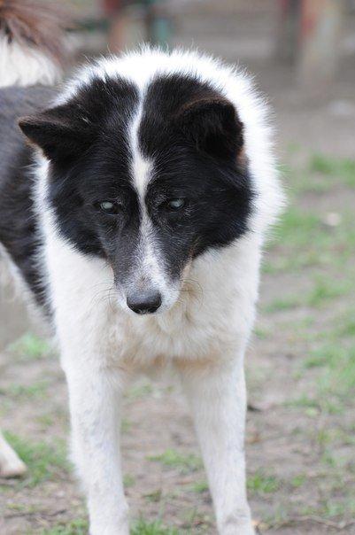 Мариупольские волонтеры спасают слепого пса и его маму (ФОТО) (фото) - фото 1