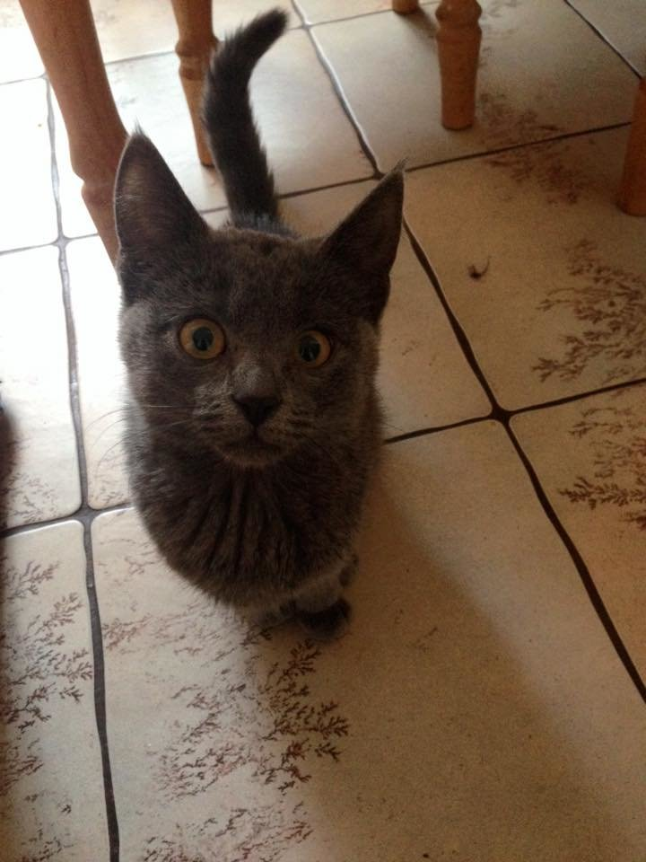 Кіт, порятунком якого переймалася вся громадськість Черкас, виявився кішкою, фото-1